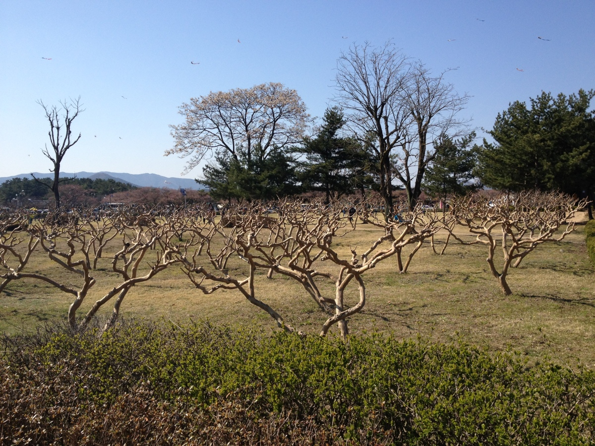 Korea Day 3: Gyeongju Weekend Jaunt Pt. I